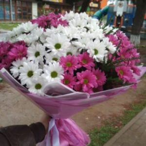 Муза хризантемы с доставкой евпатория